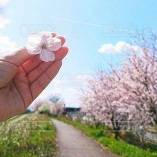 花を持つ手の写真・画像素材[3690851]