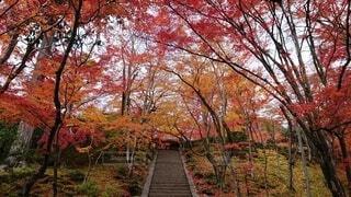 森の中の大きな木の写真・画像素材[3713156]