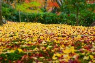 花園のクローズアップの写真・画像素材[3717627]