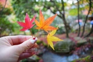 植物を持つ手の写真・画像素材[3802045]