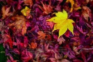 植物にピンクの花を咲かせる木の写真・画像素材[3802043]