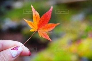 紅葉を持つ手の写真・画像素材[3802046]