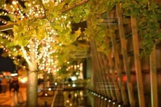 秋,冬,夜,デートスポット,光,樹木,イルミネーション,キラキラ,クリスマス,丸,ボケ,デート,グランフロント,草木,グランフロント大阪,グランフロントクリスマス