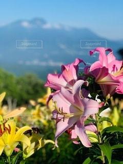 山頂に咲く生命の写真・画像素材[3572490]