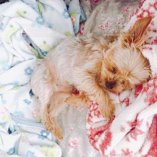 犬の写真・画像素材[247136]