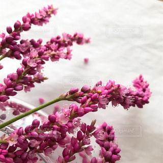 近くの花のアップ - No.852229