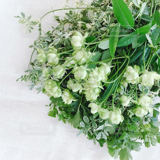 緑の植物の写真・画像素材[936160]