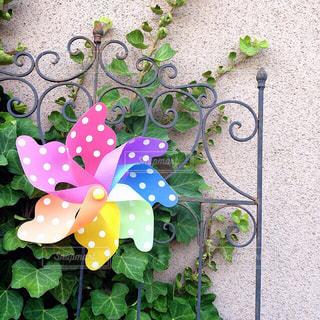 近くの花のアップの写真・画像素材[1068584]