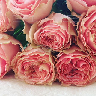 近くの花のアップの写真・画像素材[1434269]