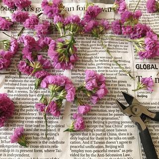 ピンクの写真・画像素材[1434447]