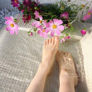 花を持っている手の写真・画像素材[1455229]