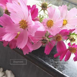 花,屋外,ピンク,コスモス,水,装飾,ディスプレイ,秋桜,飾り