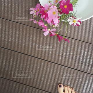 花,屋外,ピンク,コスモス,装飾,ディスプレイ,秋桜,ペディキュア,飾り
