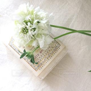 花,白,かわいい,装飾,ホワイト,飾り,ガーリー,スカビオサ