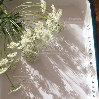 近くの植物のアップの写真・画像素材[1657407]