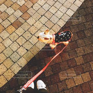 犬の写真・画像素材[1802750]