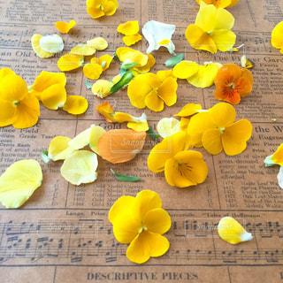 黄色の花の束の写真・画像素材[1827852]
