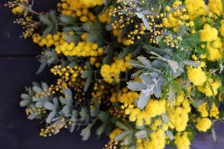花,春,綺麗,黄色,ガーデニング,ミモザ,収穫,yellow