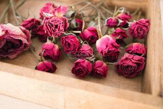花をクローズアップするの写真・画像素材[2809216]