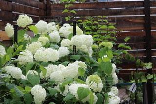 花園のクローズアップの写真・画像素材[3380761]