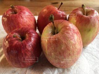 採れたてリンゴの写真・画像素材[3684266]