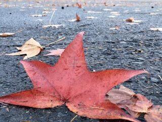 秋の終わりの写真・画像素材[3870225]