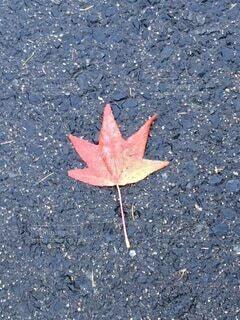 濡れ落ち葉の写真・画像素材[3870228]