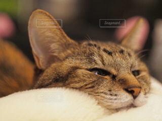 茶色いモニモニの写真・画像素材[4120541]