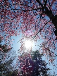 tree lightの写真・画像素材[3787799]