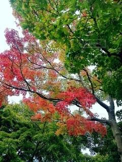 木のクローズアップの写真・画像素材[3808042]