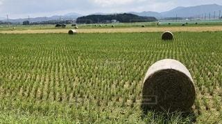 大きな藁ロールの写真・画像素材[3586792]