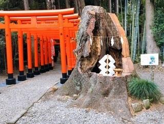 神様が宿る大樹の写真・画像素材[3605548]