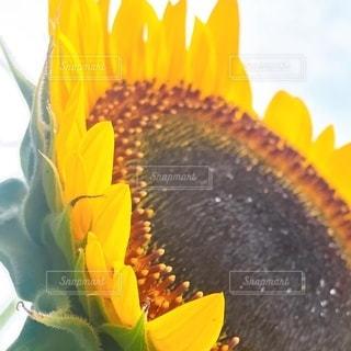 花のドアップの写真・画像素材[3608907]