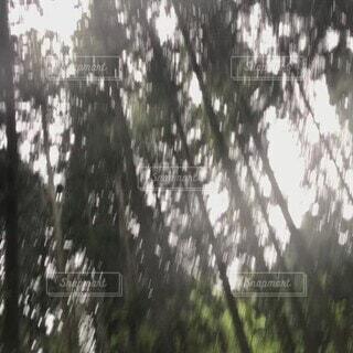 自然,空,森林,雨,屋外,神社,光,樹木,パワースポット,神,草木,動画,山水,雨音,龍神様