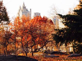 ニューヨークの写真・画像素材[556082]