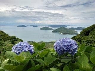 海と紫陽花の写真・画像素材[3612091]