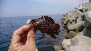 自然,海,魚,屋外,海岸,手持ち,人物,釣り,手元