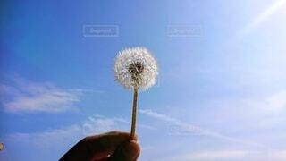 自然,風景,空,花,屋外,手持ち,たんぽぽ,綿毛,草木,手元