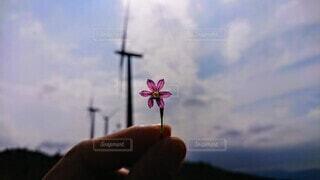 自然,風景,空,花,屋外,雲,風車,手持ち,景観,手元