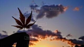 自然,空,秋,紅葉,屋外,雲,夕暮れ,手持ち,樹木,人物,手元,カエデ