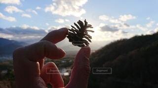 風景,空,秋,屋外,手,手持ち,人,松ぼっくり,草木,手元