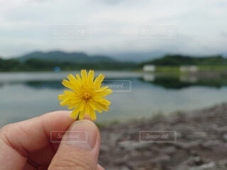 風景,空,花,手,水面,手持ち,人物,草木,手元