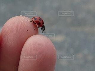 てんとう虫の写真・画像素材[3693473]