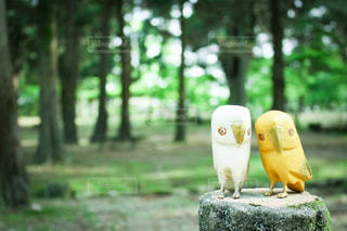 森の中で寄り添う2羽のフクロウの写真・画像素材[3606079]
