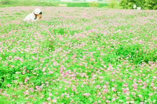 れんげ畑で夢中で撮影の写真・画像素材[3606085]