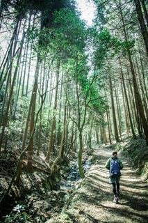 森の木の隣に立っている人の写真・画像素材[3618311]