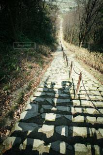 その両側に木が並んでいる道の写真・画像素材[3618310]