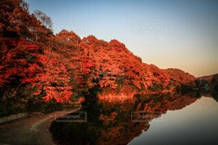 室池の紅葉の写真・画像素材[3628191]