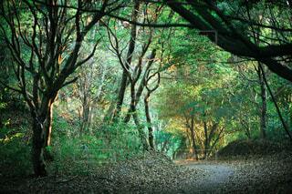 室池の秋の写真・画像素材[3628193]