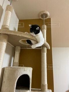 ムキムキヤンキー猫2の写真・画像素材[4178834]